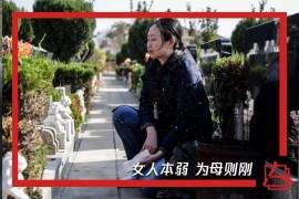 江歌母亲起诉刘鑫竟因崩溃边沿谋求最后挣扎内幕惊人!