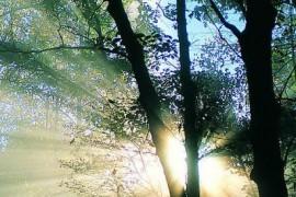 开得极为繁茂在阳光中烁烁的心中之树